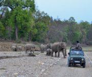 Rajaji National Park Jeep Safari