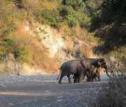 Rajaji Park Safari