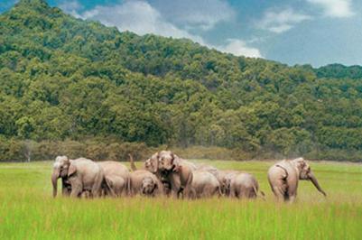 Rajaji National Park Elephant
